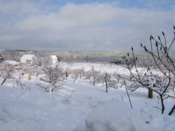 Apple Acre Area With Snow on Ground With White Buildings in Background